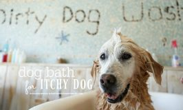 Dog Bath for Itchy Dog #ReliqPet