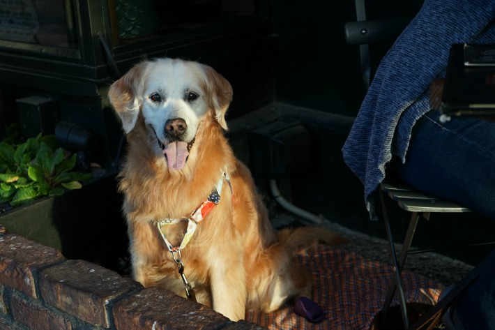 dog friendly flaherty's Carmel by the Sea