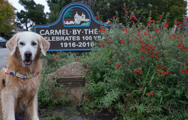 dog friendly Carmel by the Sea