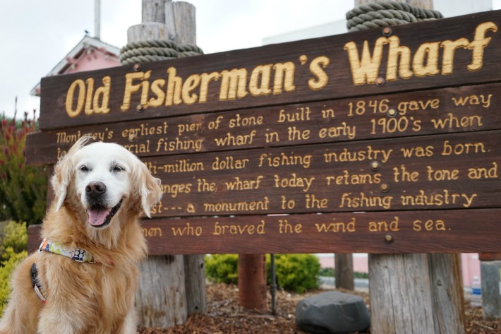 dog friendly old fisherman's wharf