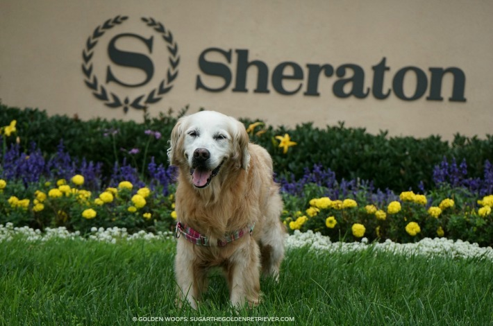 dog friendly sheraton