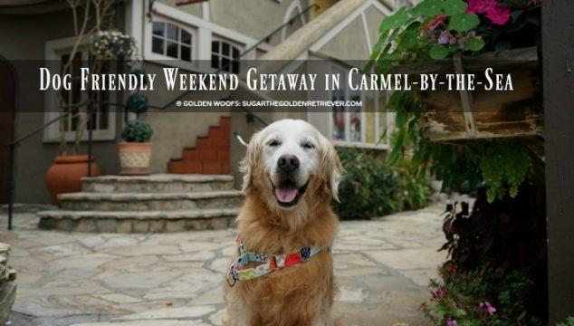 Dog Friendly Weekend Getaway in Carmel-by-the-Sea