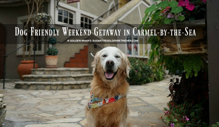 Dog Friendly Weekend Getaway in Carmel-by-the-Sea