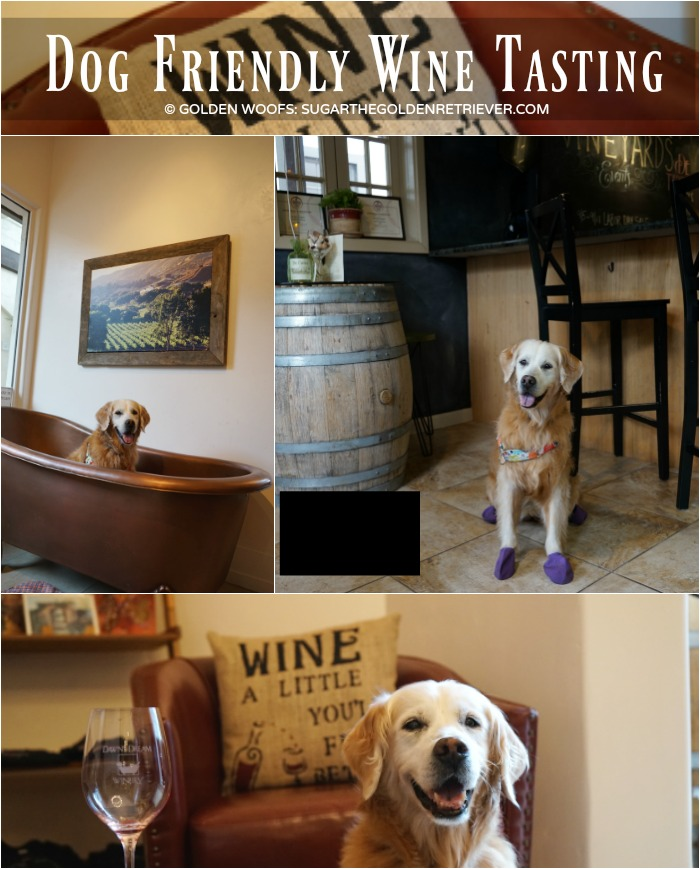 Carmel by the Sea dog friendly Wine Tasting