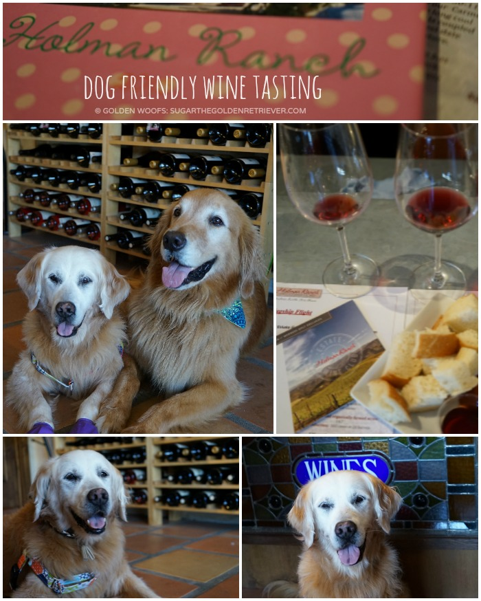 dog friendly Holman Ranch Wine Tasting