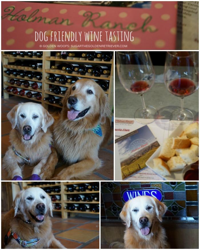 dog friendly Holman Ranch Wine Tasting