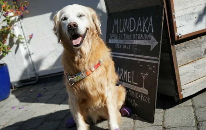 dog friendly Mundaka