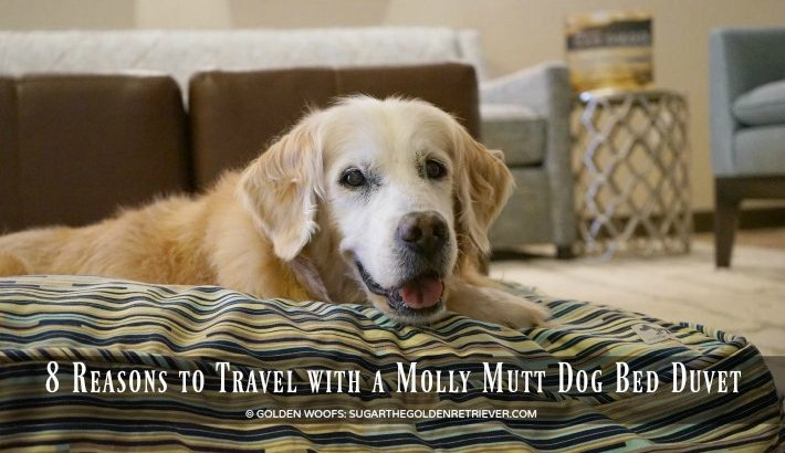 8 Reasons to Travel with a Molly Mutt Dog Bed Duvet