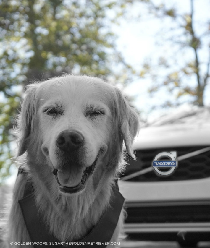 Explore Volvo
