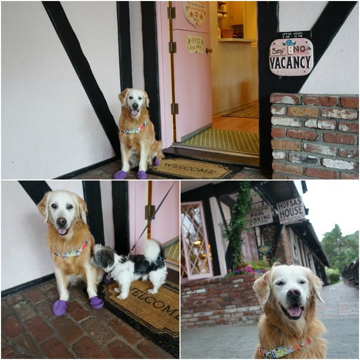 Hofsas House dog concierge
