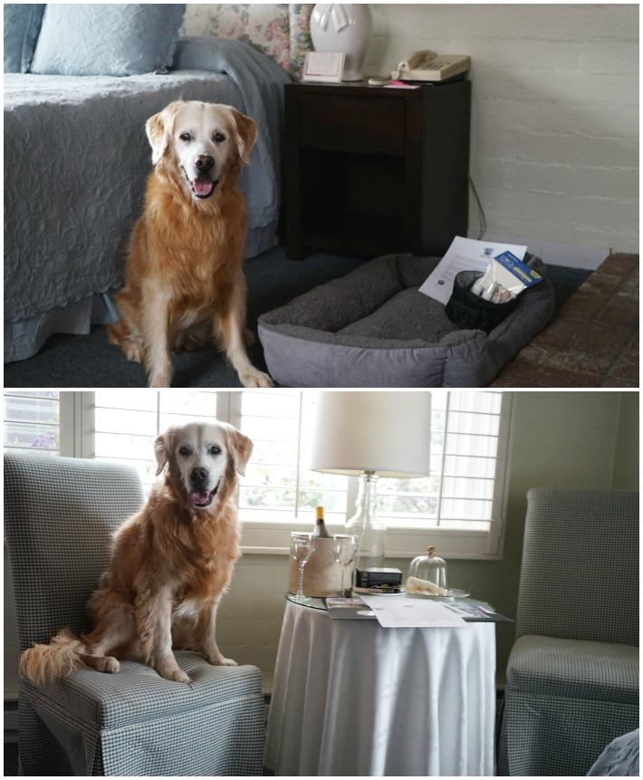 Hofsas House dog friendly