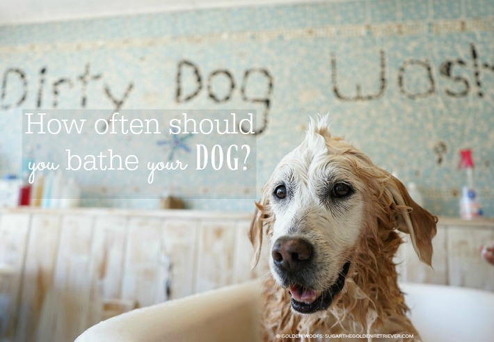 how to bathe your dog what you should be carfeul about Bathing your pup at home doesn't have to be a mystery or a being careful not to get shampoo in your pet's eyes 8 easy ways to improve your dog's bath time.