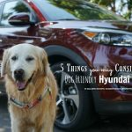 5 Things You May Consider About Dog Friendly Hyundai Tucson #DriveHyundai