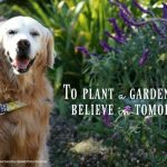{This Moment} See Beautiful: Planting A Garden