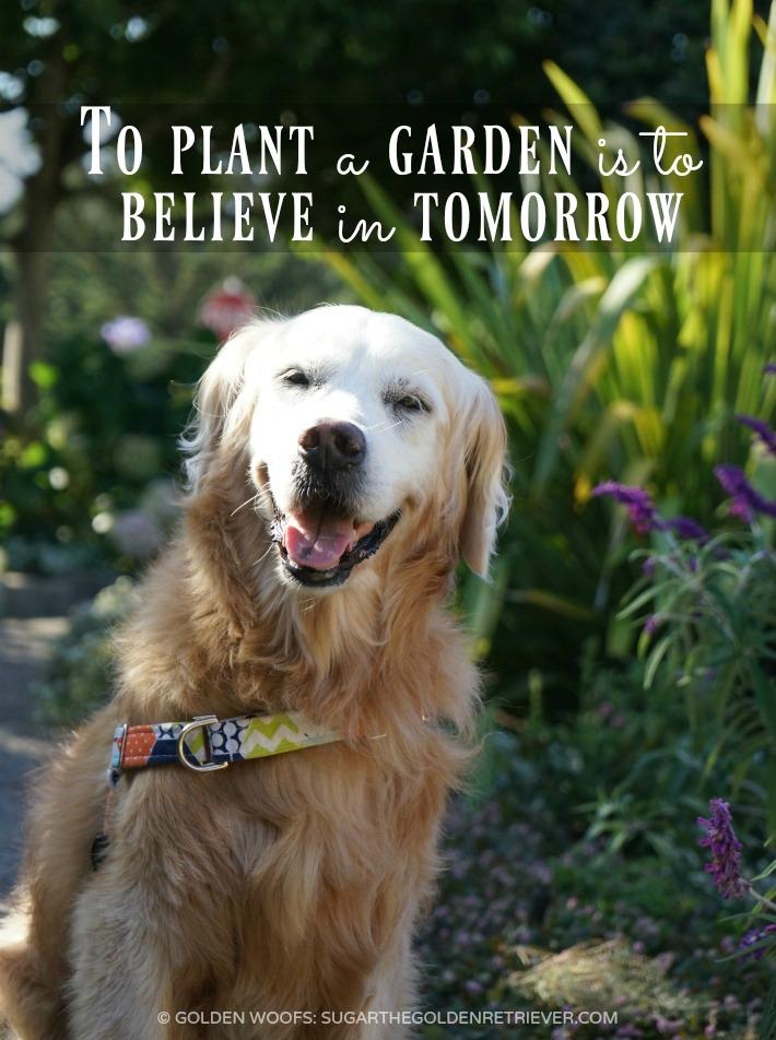 planting-a-garden