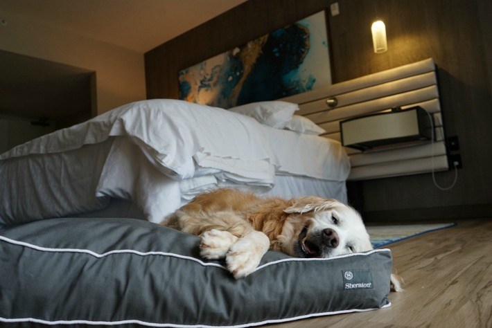 San Diego dog friendly hotel