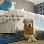 SUGAR's Suite Stay at Dog Friendly Sheraton Carlsbad