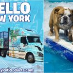 Calling All NYC Surfin' Doggies!!! #surfdogs
