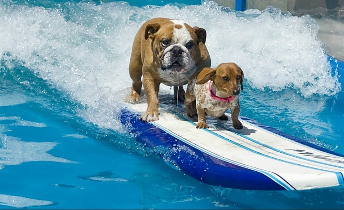 surfing dogs Sully & Coopertone