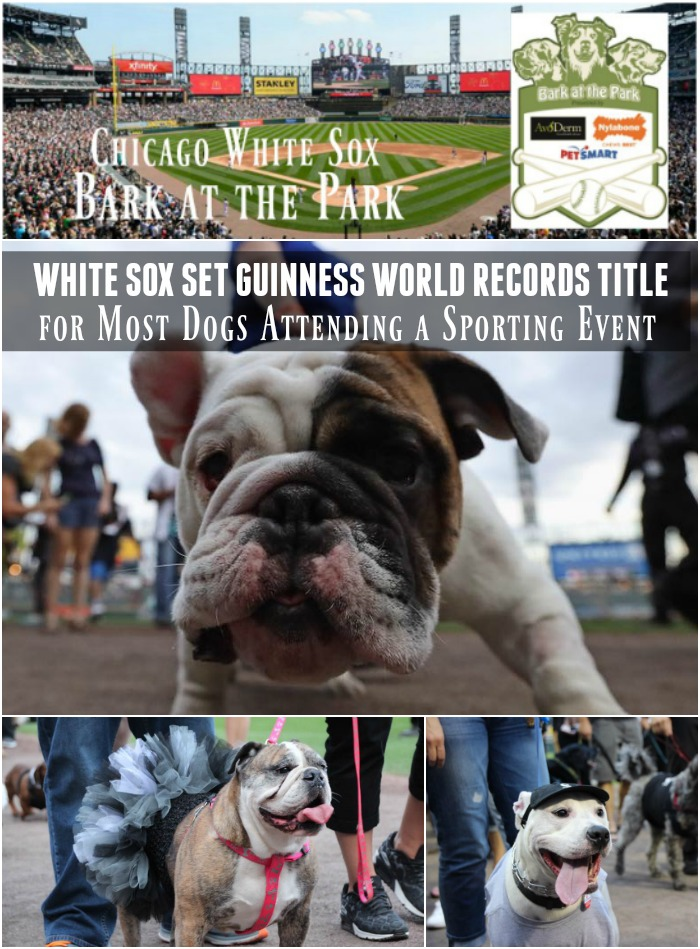 White Sox #SoxDogs Set Guinness World Records