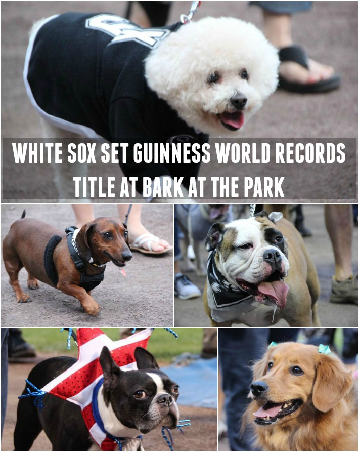 WHITE SOX SET GUINNESS WORLD RECORDS™ TITLE AT BARK AT THE PARK