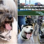 Congratulations White Sox #SoxDogs Set Guinness World Records