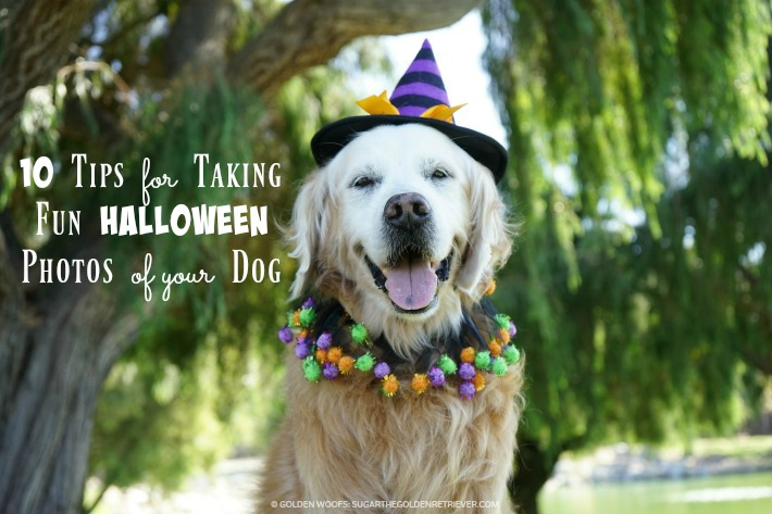 10 Tips for Taking Fun Halloween Photos of Your Dog