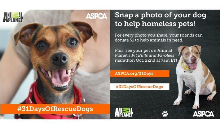 ASPCA 31 Days of Rescue Days