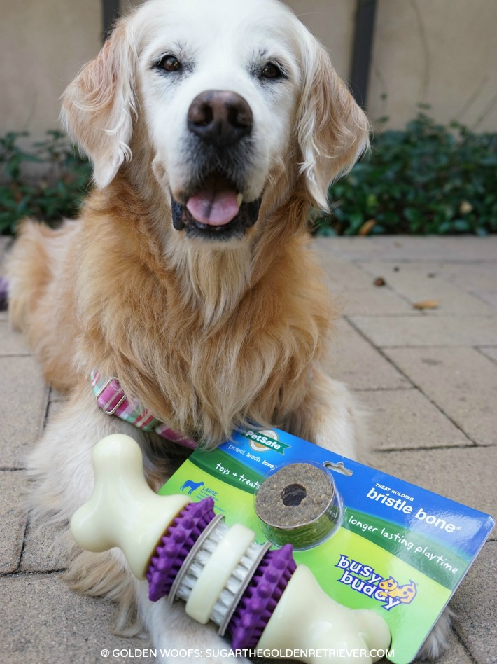 CHEWY PetSafe Busy Buddy Bristle Bone