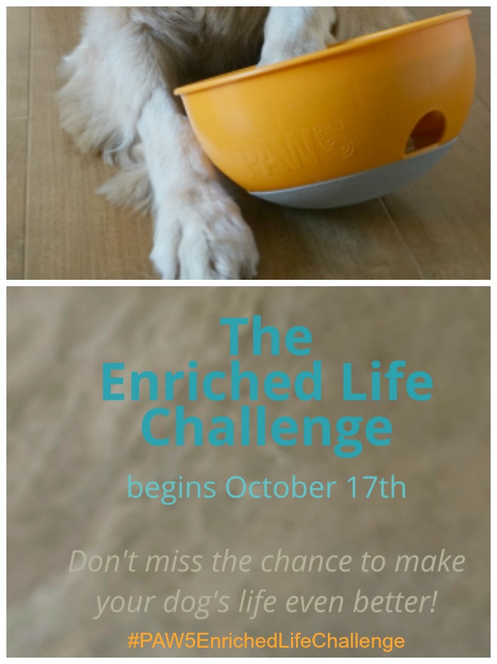 PAW5 Enriched Life Challenge