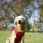 7 Fall Fun Activities With Your Dog + Safety Tips #BeSleepypodSafe