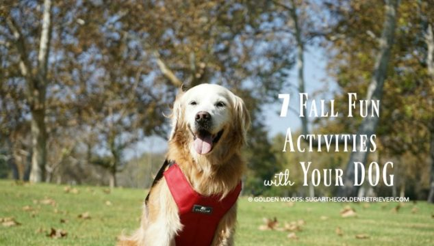 Fall Fun Activities with your dog