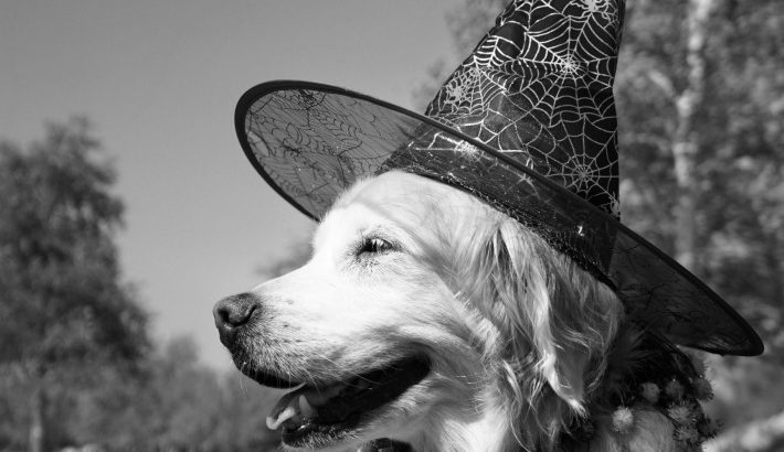 Golden Witch Dog