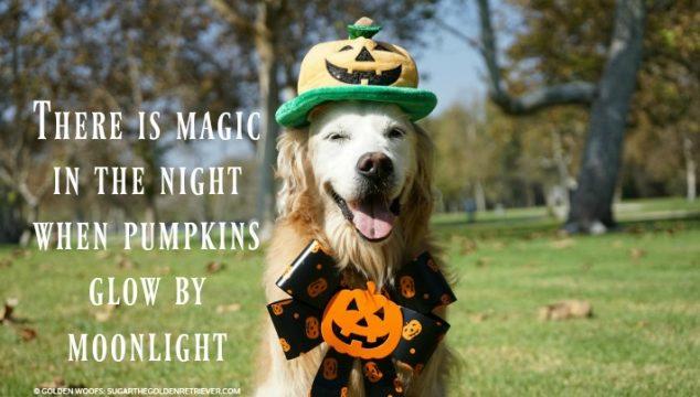 PUMPKIN Popular Pet Costume for Halloween 2017