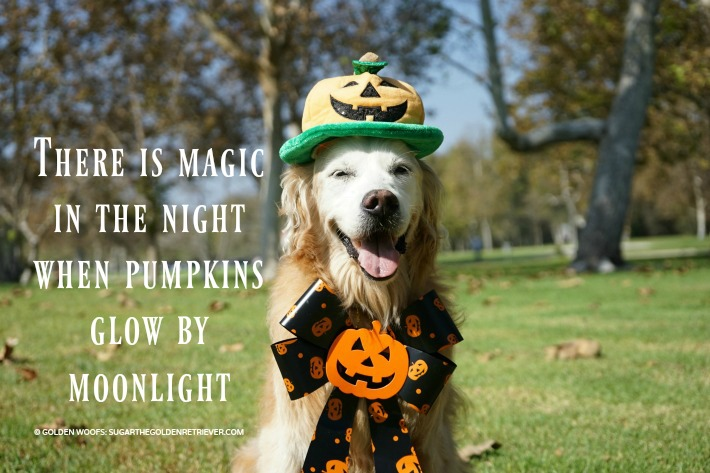 Moonlight Pumpkin | Halloween quote