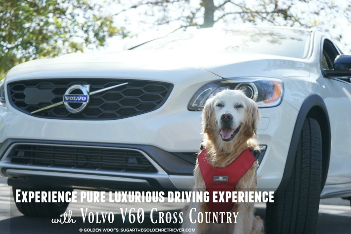 experience luxury driving experience v60