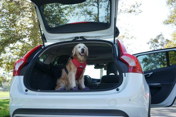 luxurious dog friendly car ride v60
