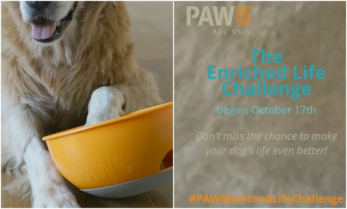 To All Dog Owners Join #PAW5EnrichedLifeChallenge