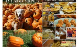 Pumpkin Facts | Pumpkin Dog Treats