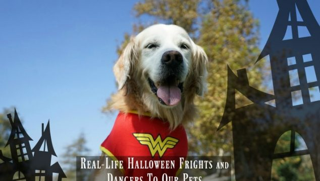 Real-Life Halloween Frights and Dangers To Our Pets