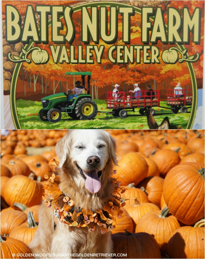 dog friendly Bates Nut Farm