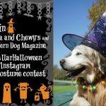 Join #StellaandChewys Instagram #StellarHalloween Contest