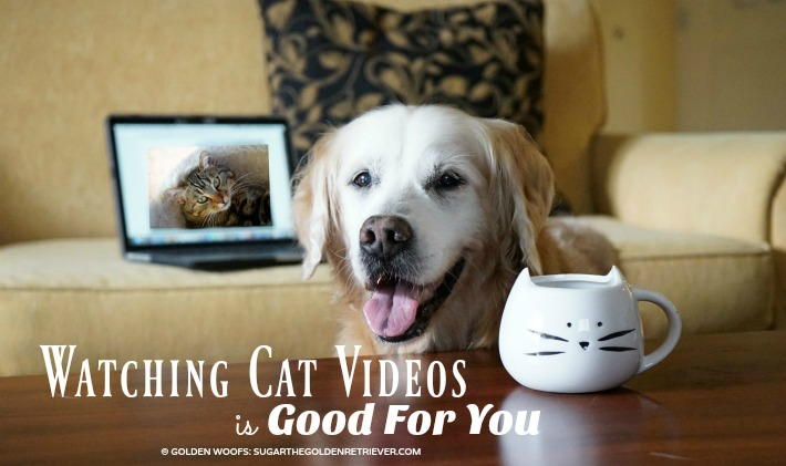 Watching Cat Videos is Good For You