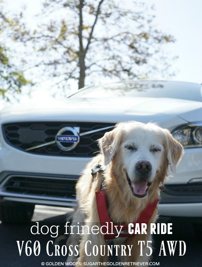 Dog Friendly Car Ride V60