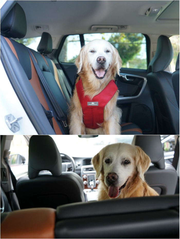 dog friendly car ride V60 Volvo