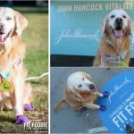 6 Do's and Don'ts Attending A Dog Friendly Race #FitFoodieRun