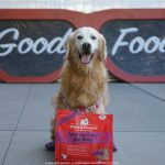 Senior Dog Fueled with Only The Good Stuff #StellaandChewys