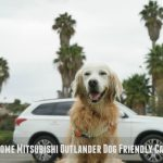 Fit Dog Pawsome Dog Friendly Car Ride #DriveMitsubishi