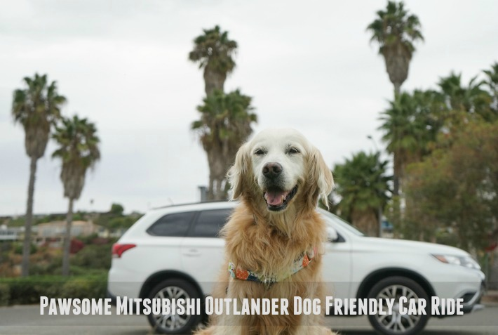 Fit Dog Pawsome Dog Friendly Car Ride #DriveMitsubishi