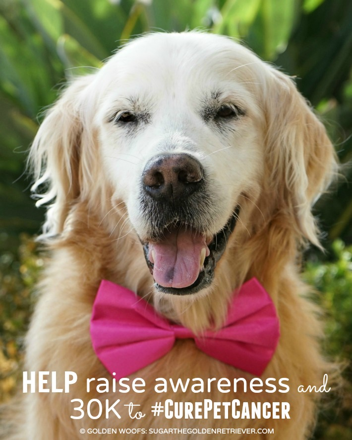 Cure Pet Cancer Nationwide